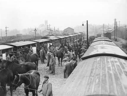 Horses at Ormskirk, 1914.