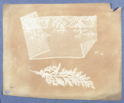 Folded lace and botanical specimen, 1839.