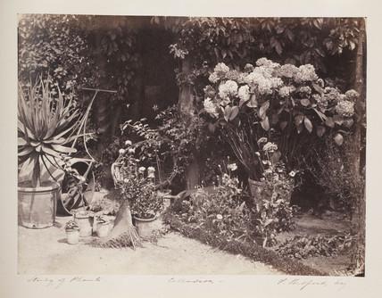 Study of plants, c 1855.