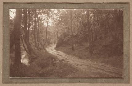 'A Woodland Road', c 1901.