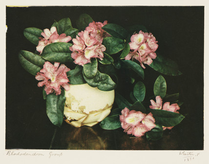 'Rhododendron Group', 1936.