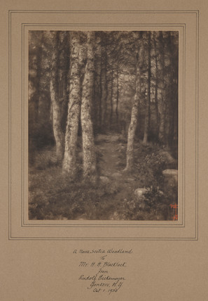 'A Nova Scotia Woodland', 1930.