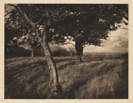 'Beyond', 1904.