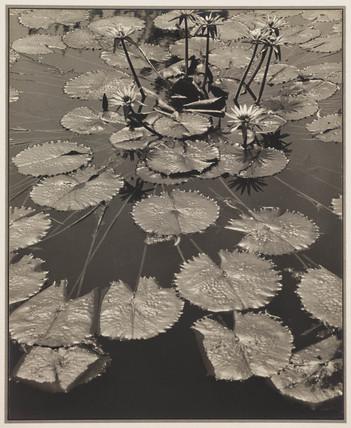 'Pond Fantasy', 1931.