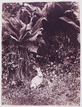 'Rabbit', c 1852.