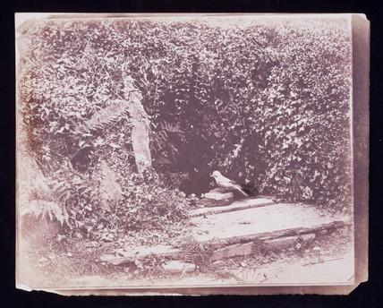 Blue Jay, c 1855.