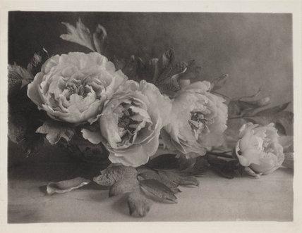 'Peonies', 1906.