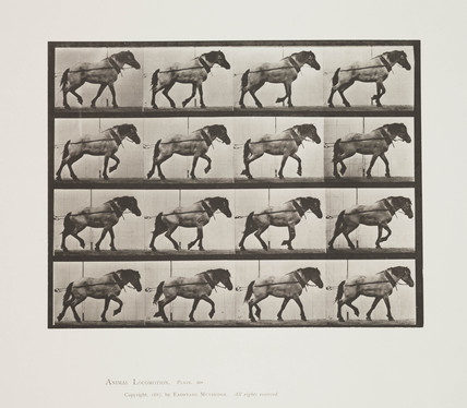 Horse walking, 1887.
