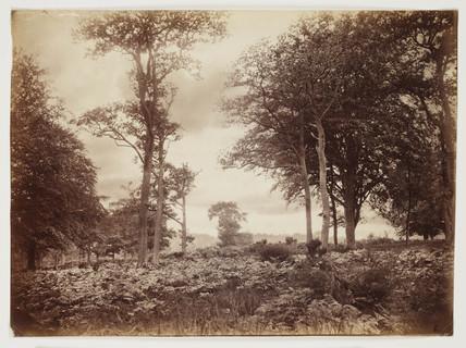 Landscape, 1870.