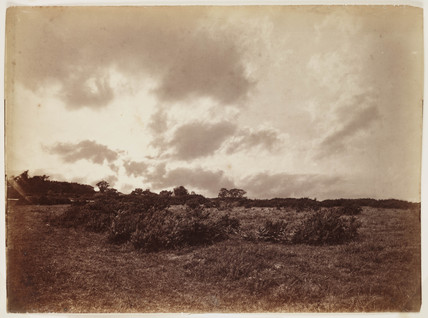 Landscape with gorse and bracken, mid-late 19th century.