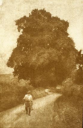 Surrey, 1903.