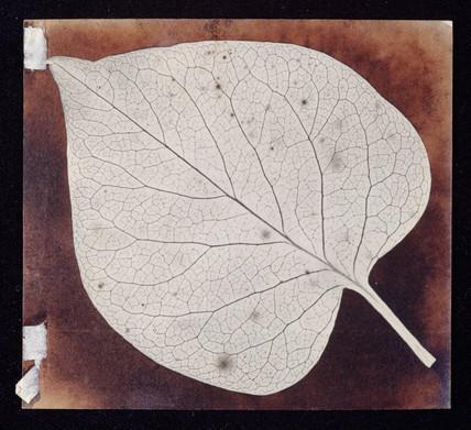 'A leaf', c 1840.