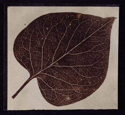 'A leaf', c 1840-1841.