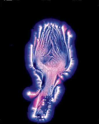 Kirlian photograph of an artichoke.