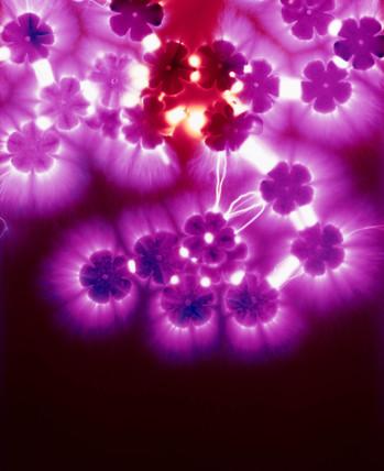 Kirlian photograph of florets.