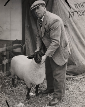 Prize-winning Suffolk ram, 4 July 1951.