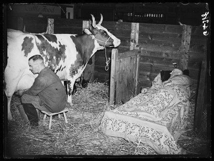 Two dairymen with their cow, London, 23 September 1938.