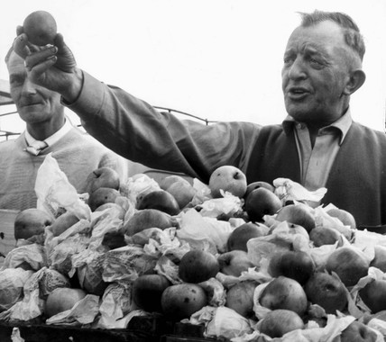 Man selling apples, Barnsley market, 1960.