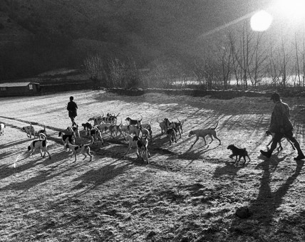 Foxhounds, c 1980s.