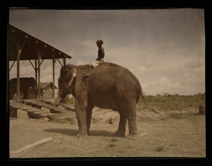 Boy on an elephant, c 1914.