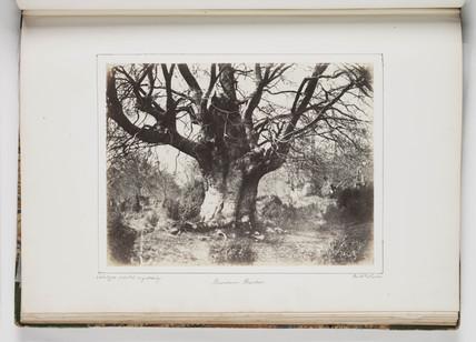 'Burnham Beeches', c 1850s.