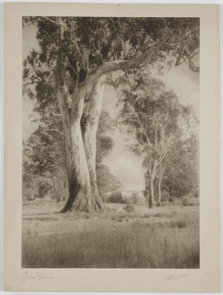 'Twin Gums', 1930.