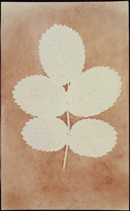 Five leaves on a stem.