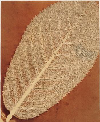 'Leaf', c 1843-1845.