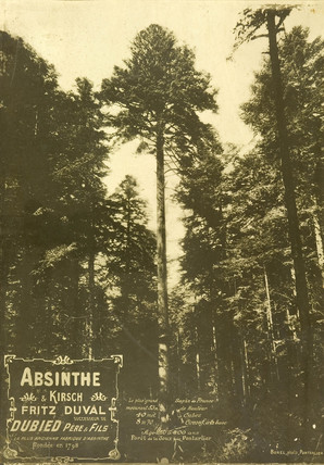 Absinthe Duval and pine forest, c 1900.