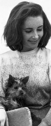 Liz Taylor with Yorkshire terrier, 23 July 1963.
