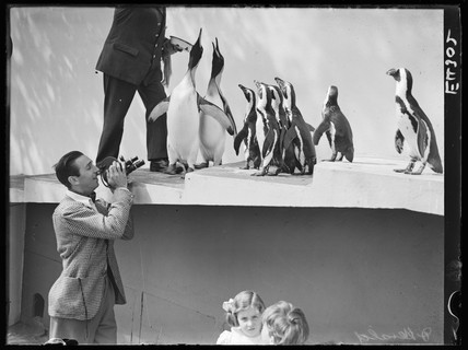 Walt Disney filming penguins at London Zoo, 1935.