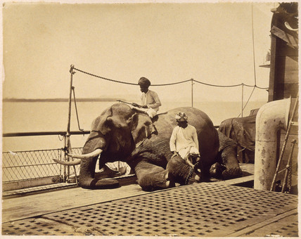 Elephant on the deck of a ship, Penang, Malaya.