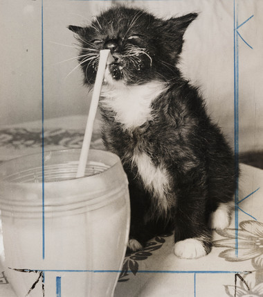 Kitten drinking milk through a straw, August 1957.