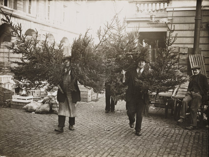 Porters carrying Christmas trees, Covent Garden, London, 29 November 1935.