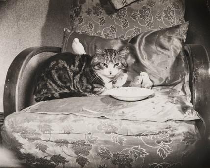 Cat and budgerigars, 2 May 1954.