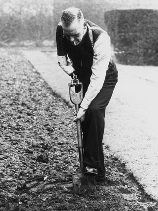 World War I pensioner digging with a prosthetic arm, 6 May 1942.