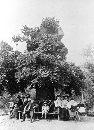 Family sitting beneath an old oak tree.