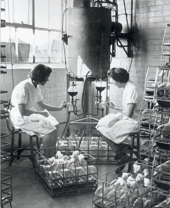 Manufacturing penicillin, 1943 ( Science and Society Picture Library )