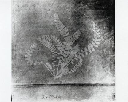 Fern, 6 February 1836.