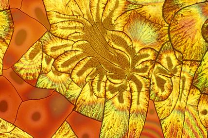 Ascorbic acid/sodium mix. Light micrograph