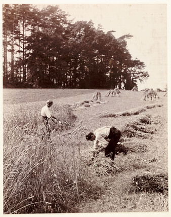 Harvesting, c 1895.