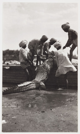 Men with crocodile, India, c 1910.