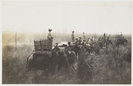 Tiger hunt, c 1897.