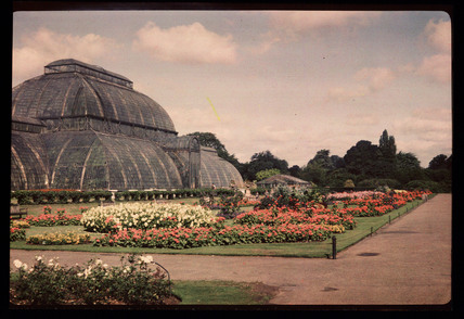 The Palm House, Kew Gardens, c 1945.