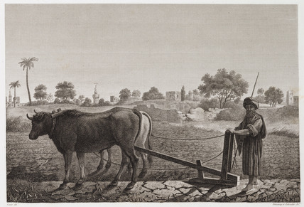 Ploughing with oxen, Egypt, c 1798.