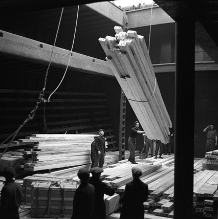 Unloading timber from the hold of the 'Bravo', Hull docks, 1949.