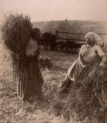 'Moissoinneurs' c 1900.