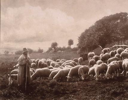 Shepherd, c 1900.