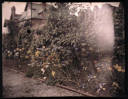 Autochrome of flowers, c 1908.