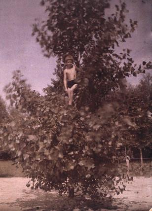 Boy in a tree, c 1920.